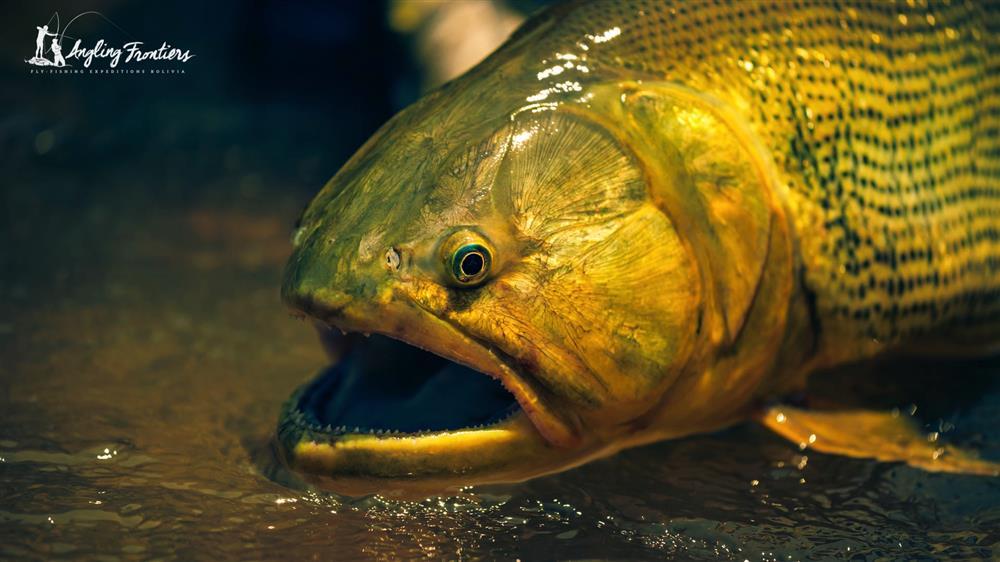 Image of: Animals Kingdom Animalia Fishhobbyist The Species Angling Frontiers