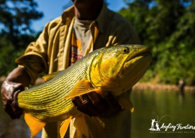 golden-dorado-camp-35